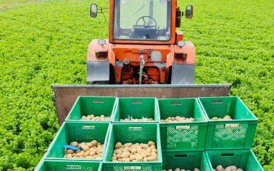 Sachsen fördert Wertschöpfung bei regionalen Erzeugnissen